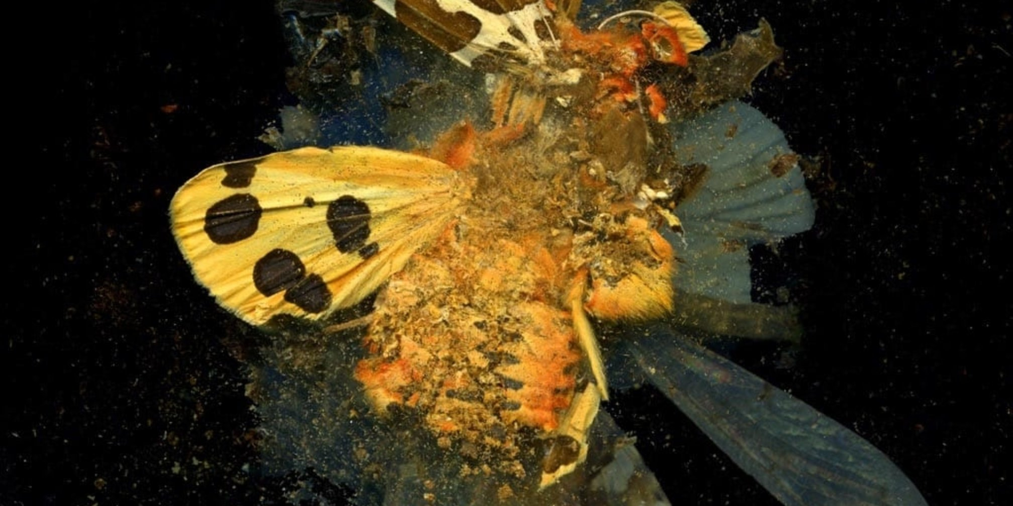 Mat Collishaw, Insecticide 24, 2008