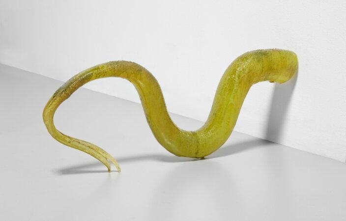 Oliva Erlanger, Ophidio (Moss), 2020