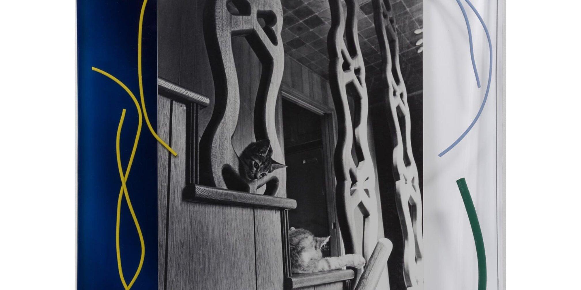 Elad Lassry, Untitled (Two Cats), 2014. Photo: Fredrik Nilson Studio