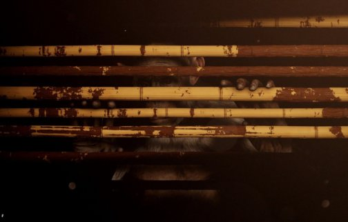 Zabludowicz Collection Invites: Ollie Dook